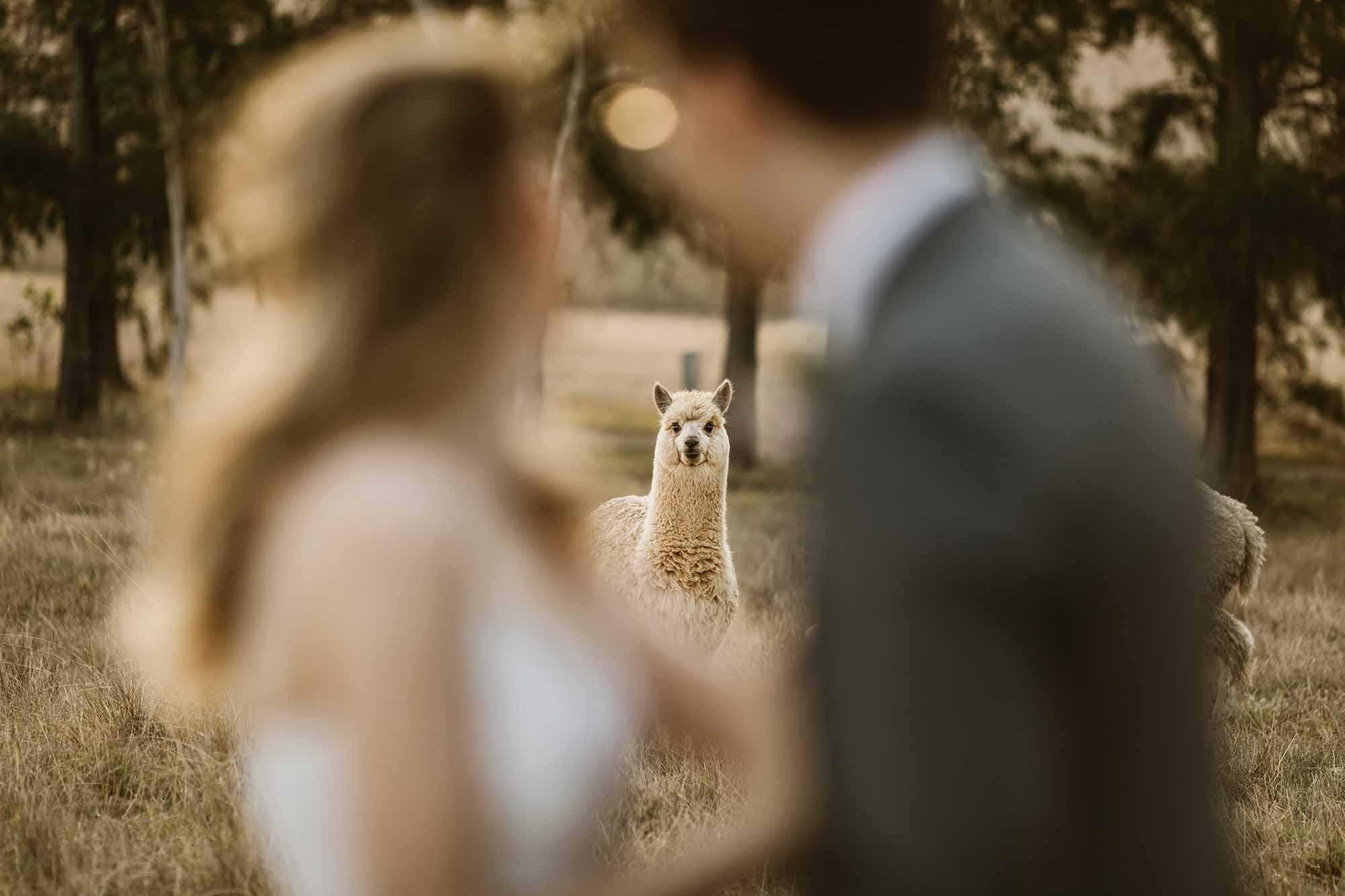 Broke Wedding Venues